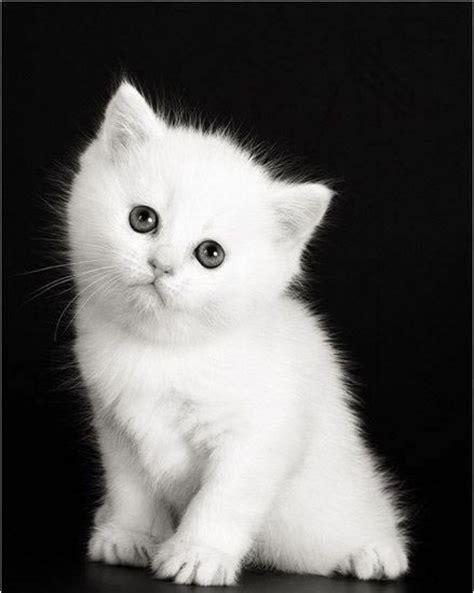 imagenes de amor de gatitos animados gatitos muy tiernos