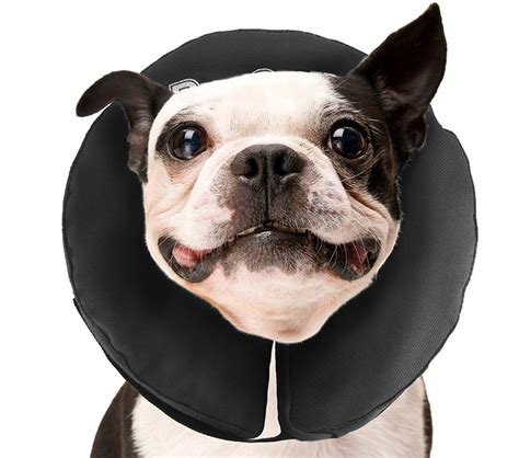 puppy cone cone buster collars collars and comfy cones we help you choose