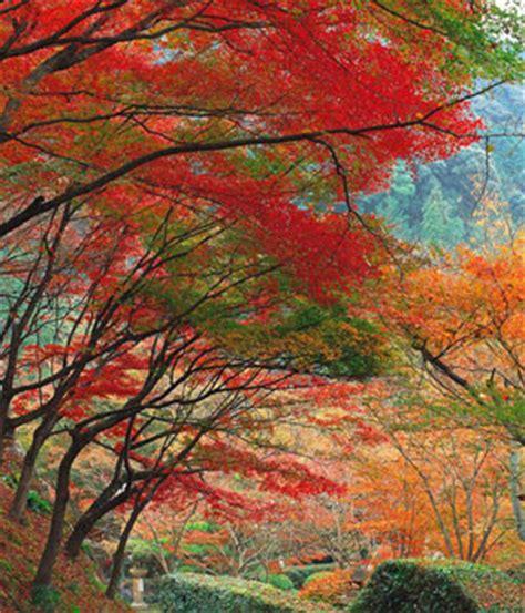 imagenes de paisajes otoño invierno paisajes de ensue 241 o paisajes de oto 241 o