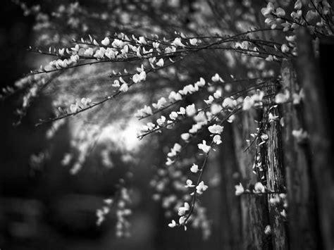 black  white wallpapers hd black  white scenic