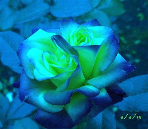 imagenes de rosas verdes y azules rosas de colores negras azules verdes arcoiris 191 existen