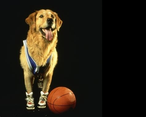 air buddy top 10 great dogs