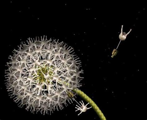 foto artistiche fiori foto magica cecelia trasforma i nudi artistici in fiori