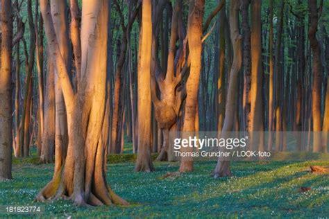 nienhagen wood alemanha places