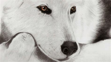 black and white wolf wallpaper black and white wolf 21 background hdblackwallpaper com