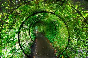 blog fuad informasi dikongsi bersama garden of
