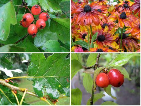 Pflanzen Für Japanischen Garten 2376 by Ausbilderblog 187 Archiv 187 Giessen Ohne Kanne