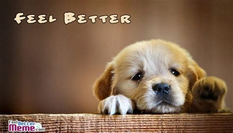 feel better puppy feel better meme pictures with