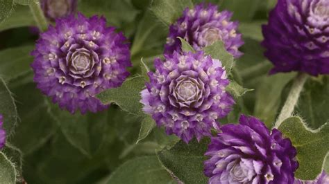 Annual flowers for shade zone 5 thin blog