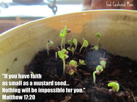 small as a mustard seed books just a