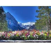 Download Wallpaper Lake Louise Canadian Rockies Banff National Park