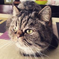 come tenere un gatto in casa tenere un gatto in casa gatto percorre km per tornare a