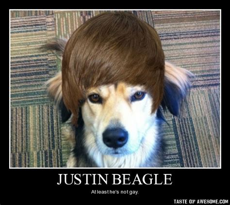 Beagle Meme - funny beagle quotes image quotes at relatably com