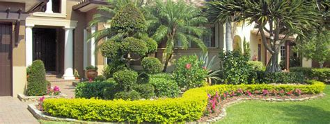 florida landscaping plants pristine landscapes fort lauderdale landscaping and