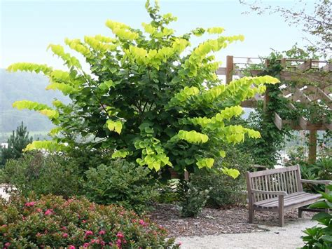 backyard plants and trees 36 best trees understory images on pinterest garden