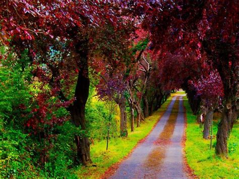 Japan Flower Tunnel by Tathmainul Qulub The Most Beautiful Scenery In The World