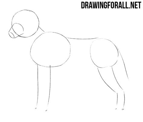 How To Draw A Drawingforall by How To Draw A Wolf Drawingforall Net