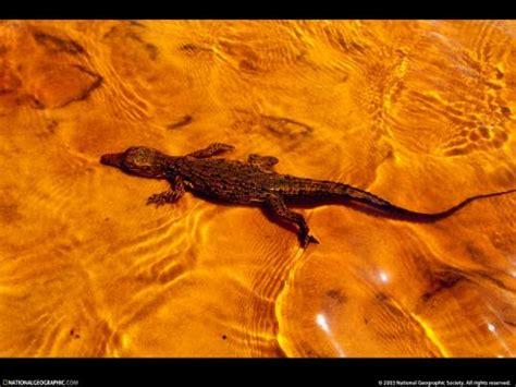 imagenes de animales salvajes gratis animales salvajes fondos de escritorio gratis 37976