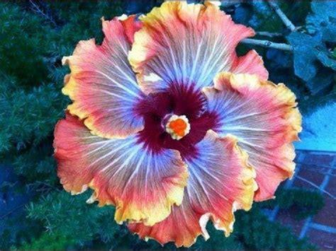 imagenes flores impresionantes im 225 genes incre 237 bles de flores ex 243 ticas plantas red