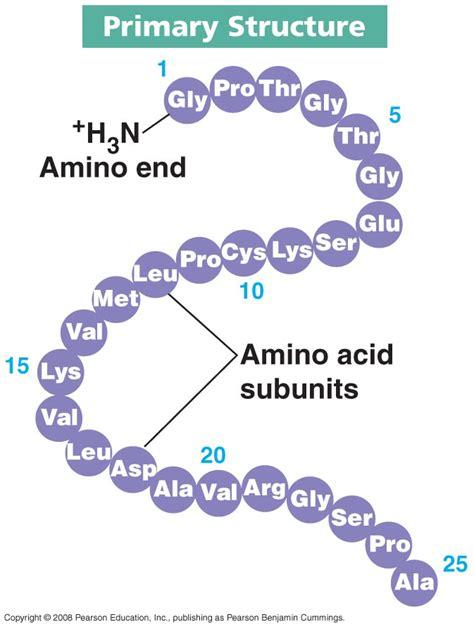 protein diagram proteins levels of structure biochemanics