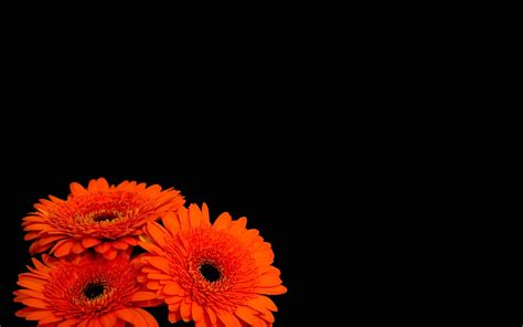 wallpaper black with flowers black background wallpaper with flowers 1 background