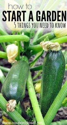 How To Start A Fruit And Vegetable Garden When To Plant Your Vegetable Garden Vegetable Garden