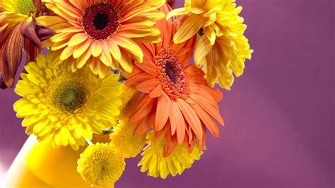 foto fiori gialli fiori gialli paesaggi sfondi desktop gratis