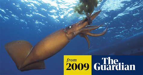 thought   safe giant squid terrorise