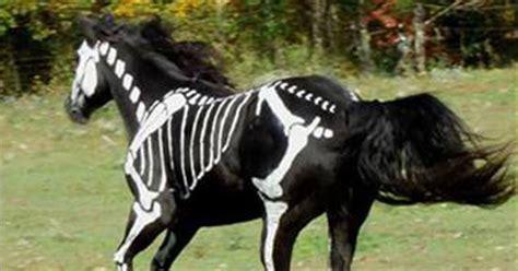 skeleton horse artist paints white bones   black horse