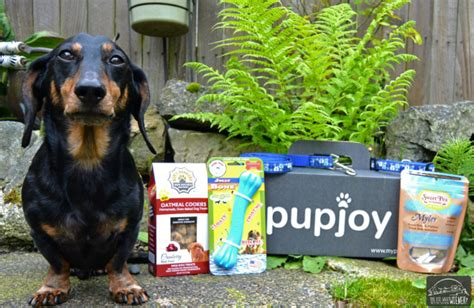 puppy subscription box the 3 best subscription boxes