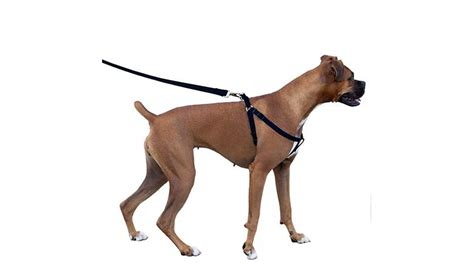 puppy harness 5 features to look for in the best harness uk for invigorating walks megamascotas