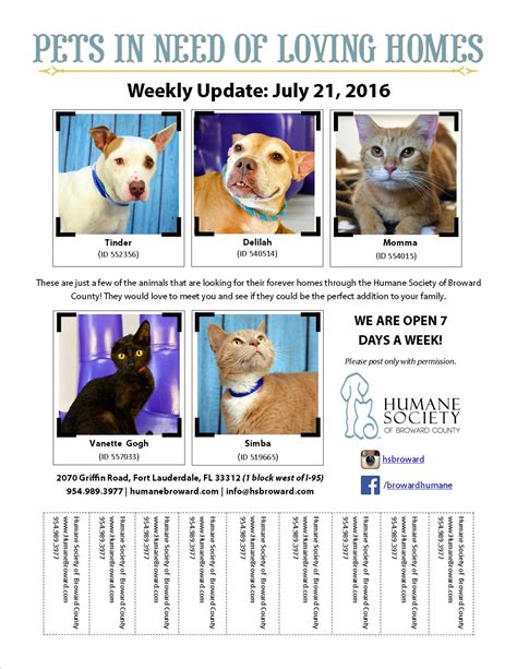 dog adoption flyer template pet flyer july 21 2016 humane society of broward