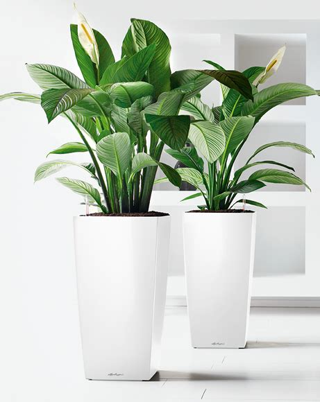 Lechuza Planters by How To Plant In Lechuza