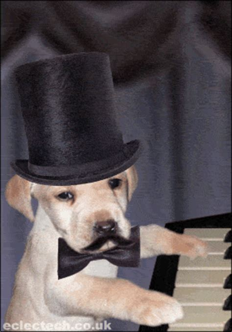 all about puppies ta posh puppy on the piano