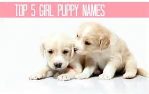 Cute puppy names dogs animalgals