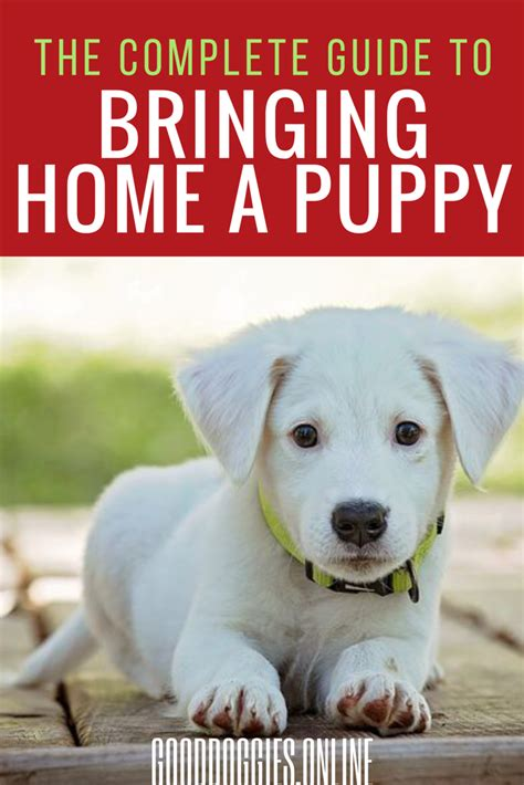 bringing a puppy home the complete guide to bringing a puppy home infographic doggies