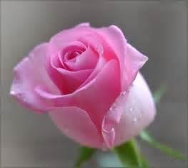 вышивка бисером роза с ландышами