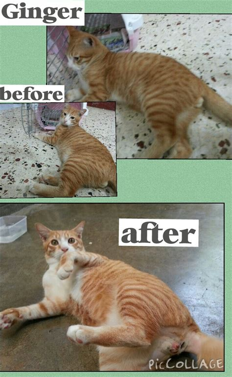 how will my be in after neutering neutering aid for 3 cats in sg petani basirah moh animalcare news petfinder my