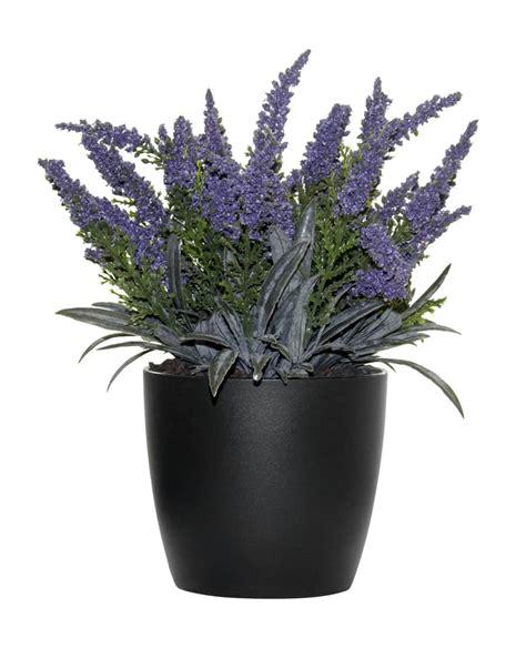 erika pflanze k 252 nstliche erika pflanze lavendel 24cm getopft
