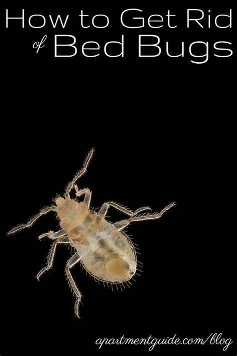 how do i know i have bed bugs moving tips 10 handpicked ideas to discover in other