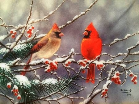 Winter Cardinal Wallpaper