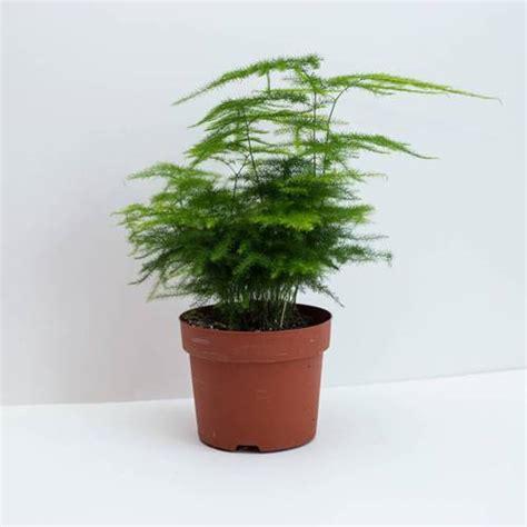 tanaman hias indoor  cocok    rumah