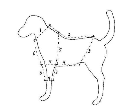 paper pattern for dog coat dog clothes patterns i m going to trace cut out and mount