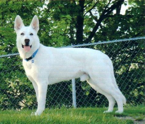 white rescue adopt a cat or a at savearescue