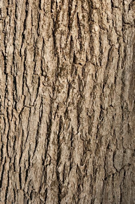 that can t bark free image of tree bark background