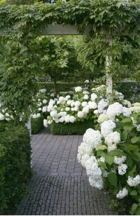 white garden ideas 25 best ideas about annabelle hydrangea on