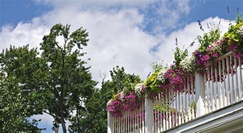 balkonpflanzen sonnig pflegeleichte balkonpflanzen infos und tipps garten mix