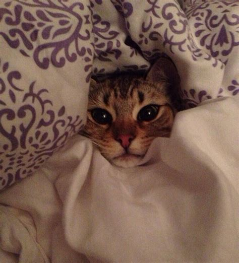 tucked in bed nedhardy com on reddit com