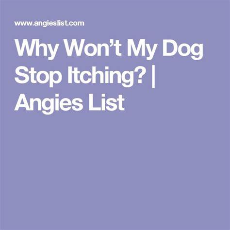 wont stop itching m 225 s de 1000 ideas sobre detener la picaz 243 n en el perro en picaz 243 n de