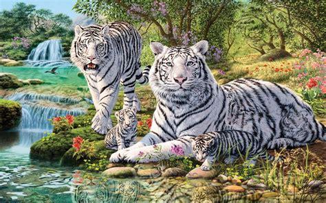 minicuentos de tigres y 8448837118 witte tijger full hd wallpaper and achtergrond 1920x1200 id 714435